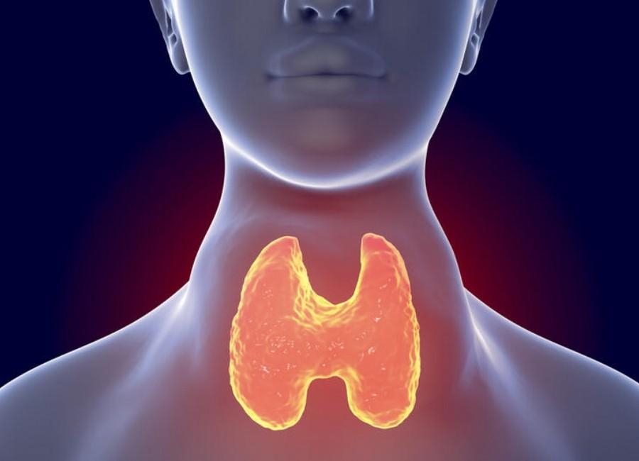 panel de tiroides